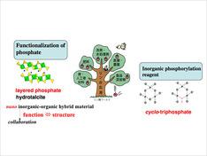 リン酸塩は様々な分野に利用できる機能性物質として注目されており、DNAやATPの構成物質として生体内でも重要な役割を果たしている。このリン酸塩の特性を利用した機能性化合物を合成している。