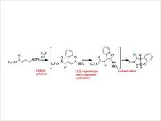 共役オキシムエーテルへのラジカル付加反応と[3,3]‐シグマトロピー転位反応を組み合わせたドミノ型反応を開発しました。この反応では一挙に複数の結合を構築し、非常にユニークな三環性骨格を構築することができます。