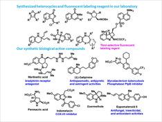 上記で開発した新しい合成手法を用いて、短段階かつ効率的な経路で種々の新規化合物、特に多官能性複素環化合物類を合成し、より良い医薬品に向けての候補化合物を創り上げています。また、報告されている生物活性物質のより効率的な全合成研究もおこなっています。更に本研究を通して見出された新規化合物類の中から他の研究グループとの共同研究により新規医薬品シード化合物を探索します。また、治療用医薬品のシード化合物だけでなく、診断薬のシード化合物となるような蛍光プローブなどの機能性分子の開発もおこなっています。