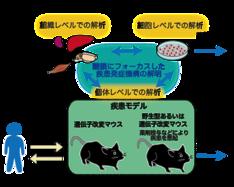 図2 糖鎖の機能とその破綻によりおこる疾患を統合的に理解するための実験方法の概略
