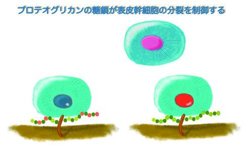 【プレスリリース】乾癬を発症しやすい皮膚に隠された異常の原因を解明(生化学研究室)