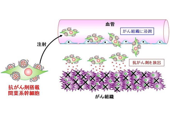 細胞によるがん組織への抗がん剤宅配デリバリー!?【神研PJ・FR】